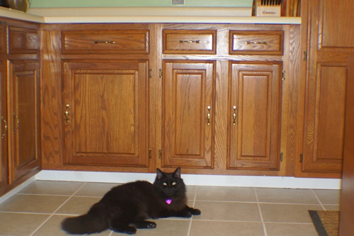 Newly tiled kitchen floor with cat