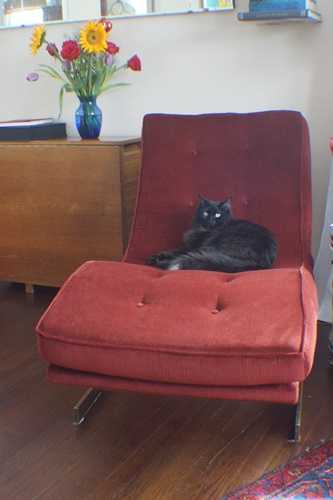 Cat on chaise lounge