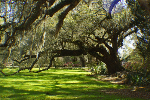 Magnolia Plantation, South Carolina