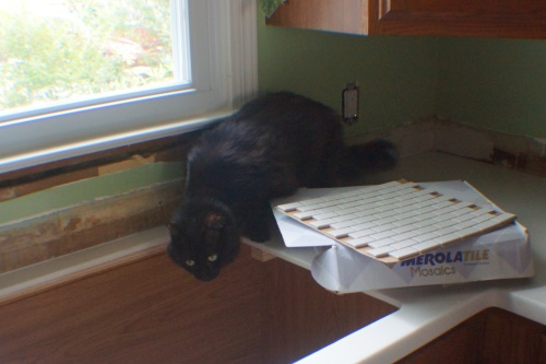 Cat in kitchen construction