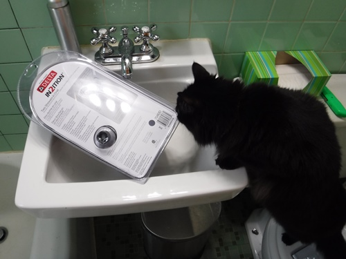 Cat inspecting new shower head