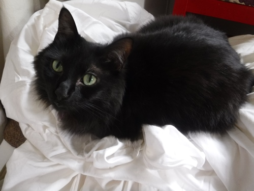 Cat on a pile of sheets