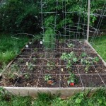 Newly planted garden bed