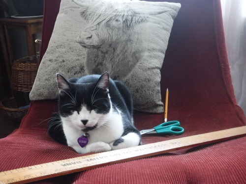 Cat by sewing tools