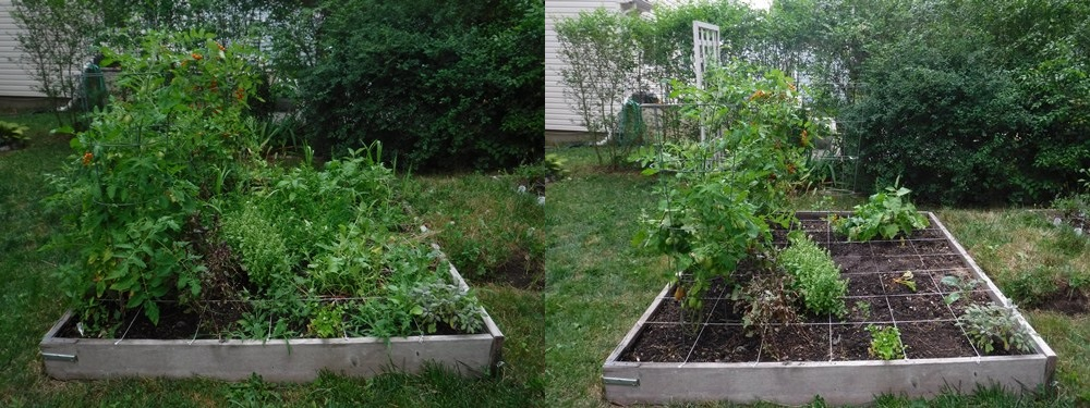 Before and after garden bed