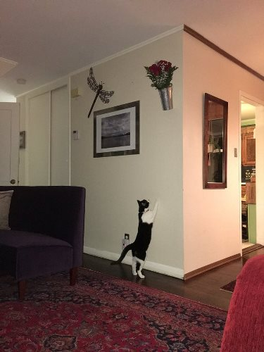 Cat trying to get flowers