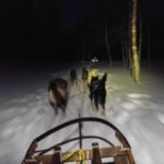 Dog Sledding in Norway, Lyngstfjord's Camp Tamok