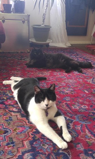 Cats on carpet