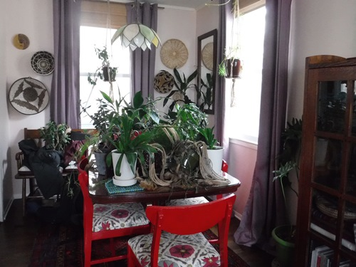 Plants on the dining room table